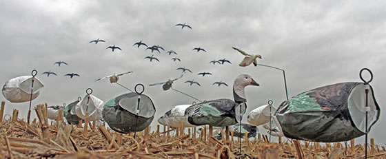 spring-snow-goose-hunts