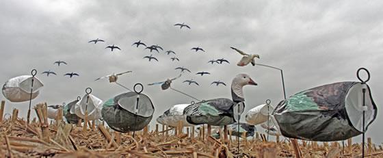 spring-snow-goose-hunts
