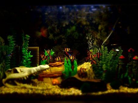 aquarium-2841628__340