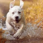 What Are The Latest Trends Of The Pet Industry For Current Year?